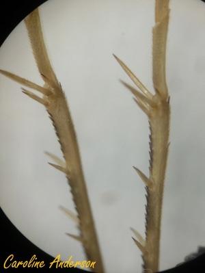 Microscope_2013-09