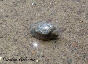 Gastropoda marée basse