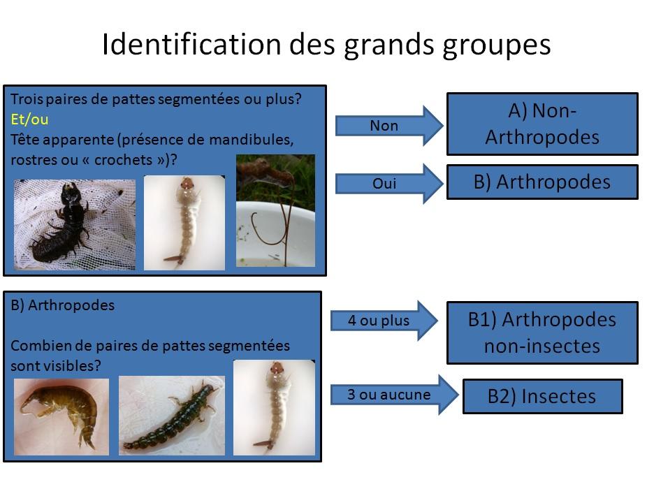 Identification_Schéma_CAnderson