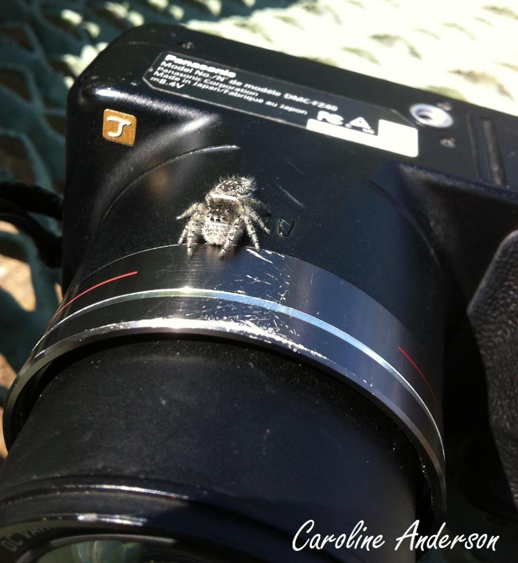 Le sujet de la photo peut parfois se retrouver derrière l'objectif plutôt que devant!