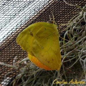 Papillons en fête 7