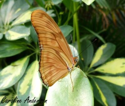 Papillons en fête 1