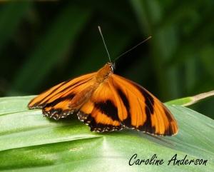 Papillons en fête 2