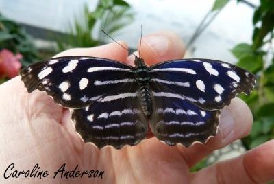 Papillons en fête 3