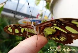 Papillons en fête 4