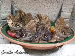 Papillons en fête 5