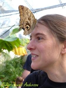 Papillons en fête 6
