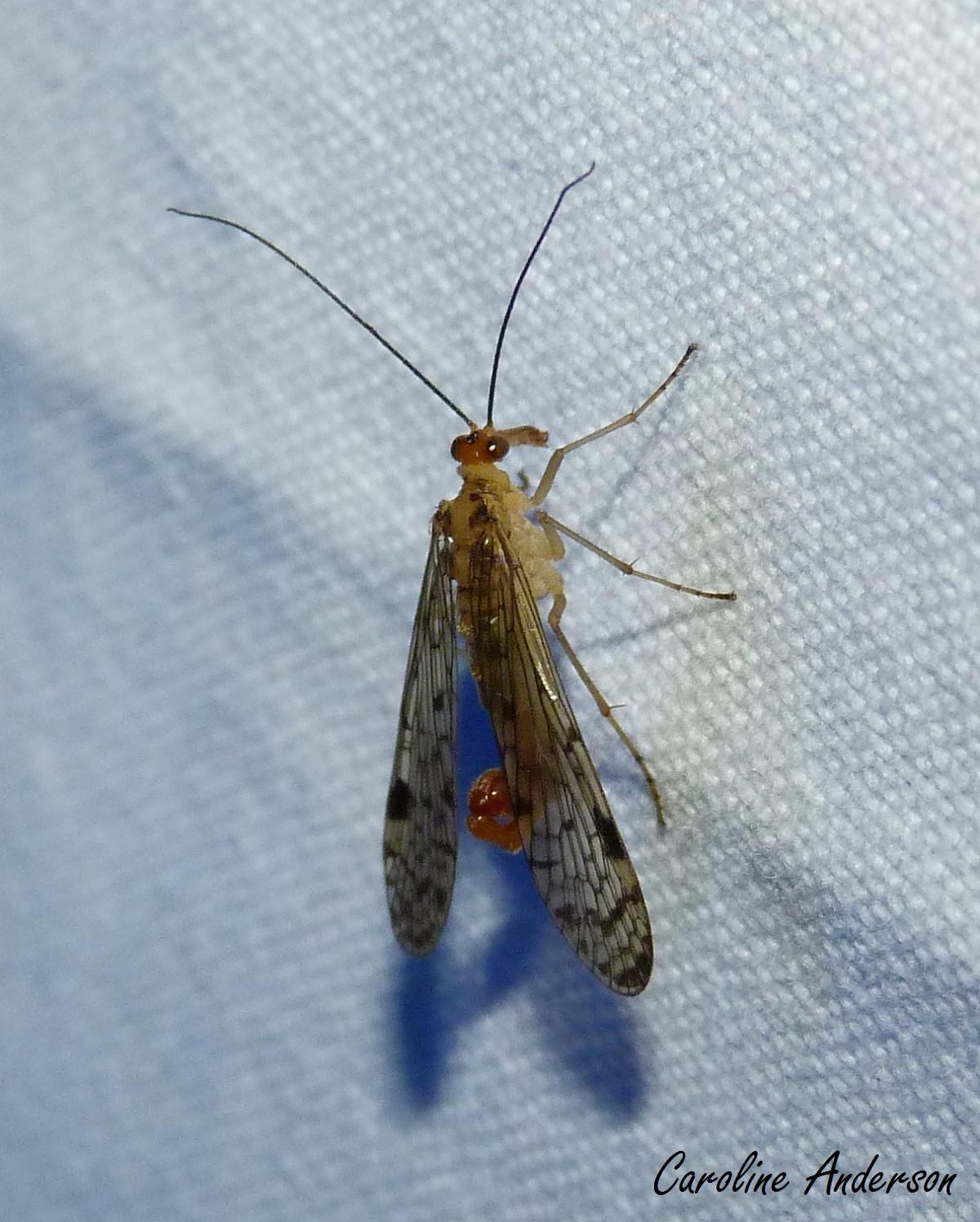 Virgo mâle datant Scorpion femelle meilleure introduction en ligne de rencontres