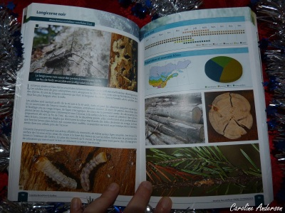 Exemple de fiche pour le longicorne noir – Tiré de Insectes des arbres du Québec