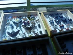 Plusieurs cadres permettaient d'admirer des insectes fort colorés